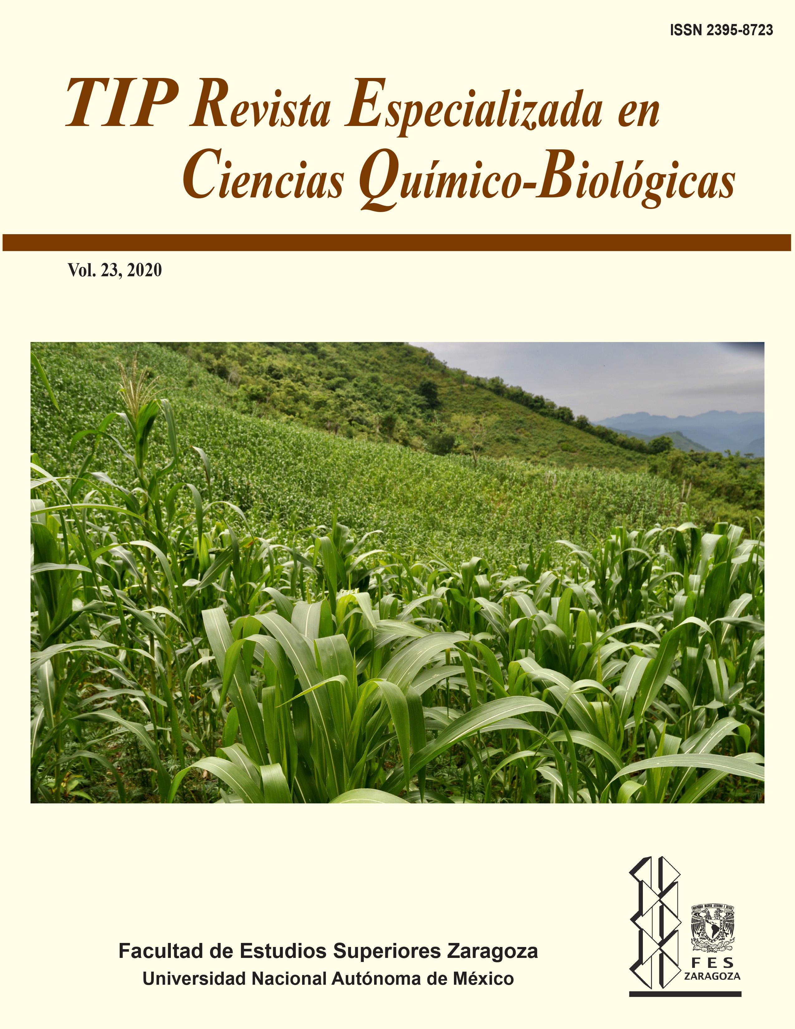 Milpas en la Huasteca Hidalguense, en la comunidad de Xochiatipan, Hidalgo, México. Fotografía de: Ricardo María Garibay.